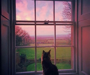 cat, window, and nature image