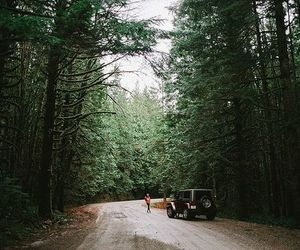 forest, jeep, and nature image