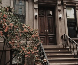 flowers, house, and brown image