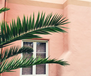 pale, palms, and photography image