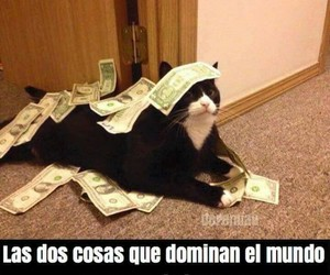 cat and money image