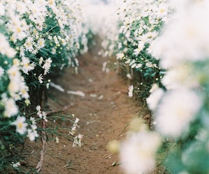 daisy, film, and Film Photography image