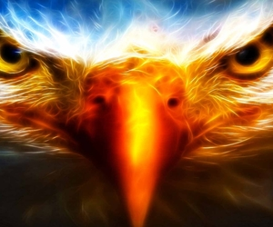 eagle, majestic, and water and fire image