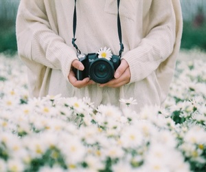 daisy, Film Photography, and flowers image