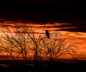 alone, sunrise, and bird image