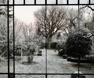 beautiful, cold, and garden image