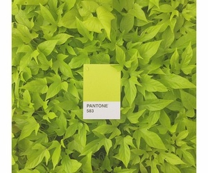 pantone, aesthetic, and plants image