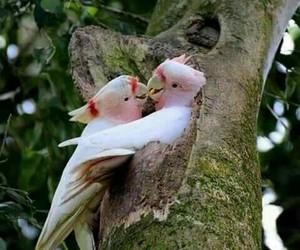 birds - nature image