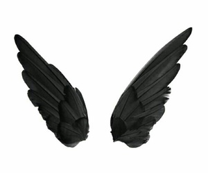 wings, black, and fly image