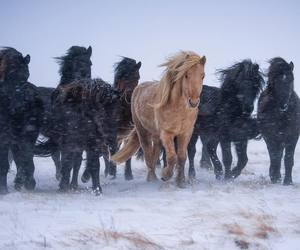 animals, horses, and winter image