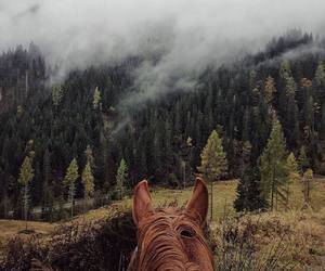 horse and landscape image