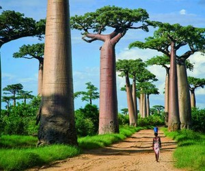 africa, travel, and madagascar image