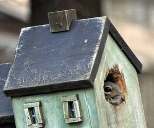 bird house, rustic, and squirrel image