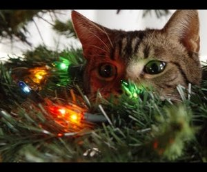 cats, trees, and christmas trees image