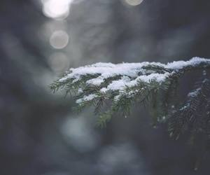 background, christmas, and photography image