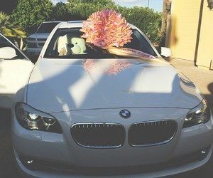 bmw, birthday, and cars image
