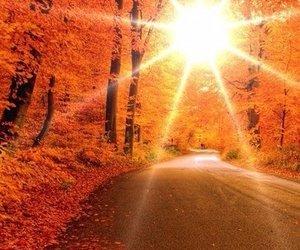 autumn, sun, and orange image