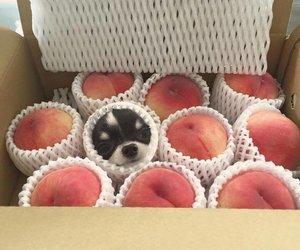 dog, peach, and animal image