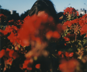 flowers, red, and indie image