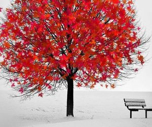 autumn, photography, and winter image