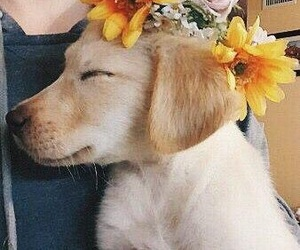 animal, flower, and pup image