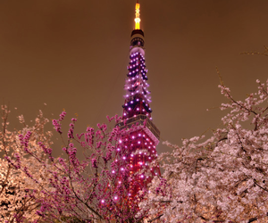 asia, blossom, and beautiful image