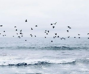 birds, waves, and ocean image