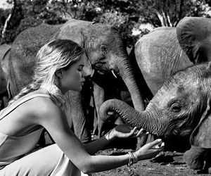 elephant, Doutzen Kroes, and model image