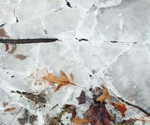 autumn, fashion, and nature image