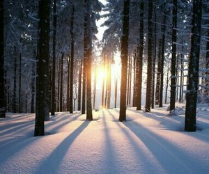 december, lights, and trees image