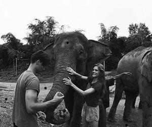 animal, couple, and elephant image
