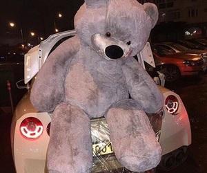 bear and car image
