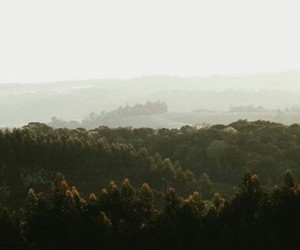 fog, forest, and hills image