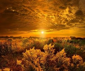 atardecer, dorado, and autumn image