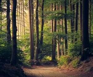 adventure, autumn, and path image