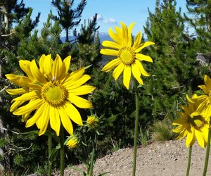 flowers, yellowstone, and nature image