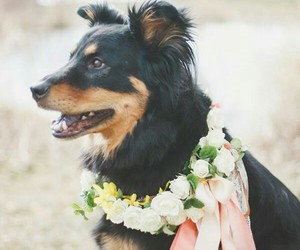 black, dog, and flores image