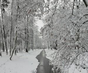 beautiful, christmas, and cold image