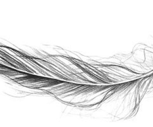 feather, black and white, and drawing image