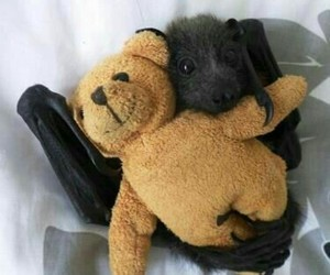 bat, teddy, and animal image