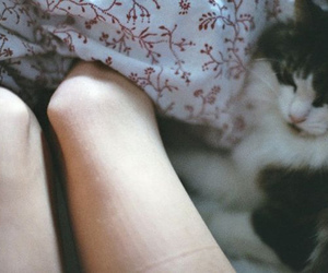 cat, legs, and vintage image