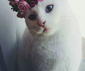 blanco, cat, and flores image