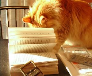 animals, animal, and book image