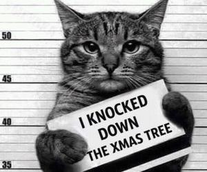 animals, christmas, and lol image
