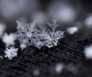 snowflake, white, and winter image