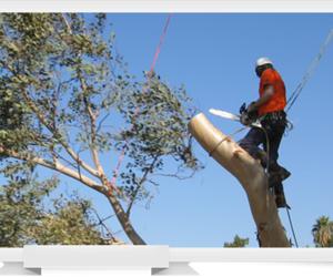 woodland tree removal, winters tree removal, and winters tree service image