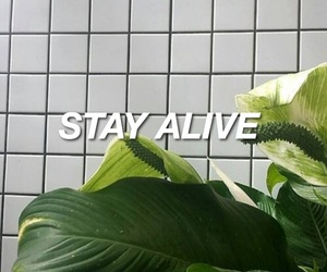 grunge, plants, and green image