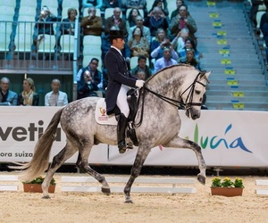 dressage, horse, and horseriding image