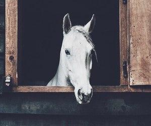 dark, dreamy, and horse image