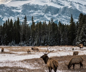 nature, animals, and mountains image